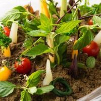 無農薬野菜のクルディテ