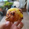 シュガーポット - 料理写真:スイートポテトマロンパイ