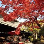 56120052 - 紅葉がきれいでした。