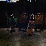 ペンギン シーフードワールド 漁亭 - ペンギンの散歩