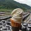 黒酢本舗 桷志田 - 料理写真:桷志田名物「黒酢ソフトクリーム (300円)」