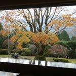 料亭旅館 いちい亭 - 晩秋のお庭 紅葉も終わりに近ずいて