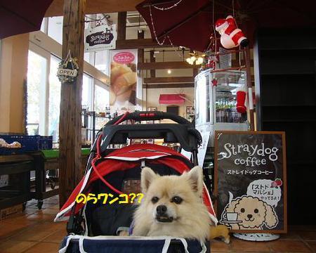 ストレイドッグ コーヒー 富士河口湖店