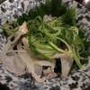 酒処麺処きのした - 料理写真: