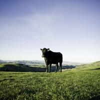 肉好きが最後に辿り着いた...数量限定!!NZ産牧草牛の旨み