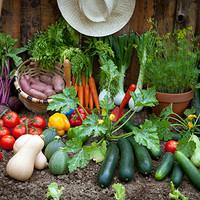 「軽井沢発地市庭」の美味しい高原野菜を新橋の皆様へ