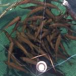 漁師料理 かつら亭 - 魚がたくさん。