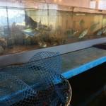 漁師料理 かつら亭 - 水槽です。
