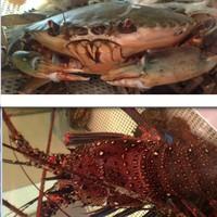 活きの伊勢海老と珍しい浜名湖のどうまん蟹もございます。