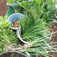 地産地消の新鮮な地場野菜