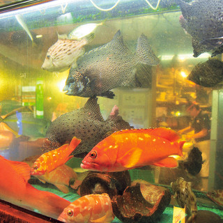 大型イケスからすくいあげたばかりの活魚‼だから新鮮で贅沢♪