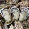 宮城県漁協直送 宮城牡蠣の家「大漁や」 - 料理写真:料理写真