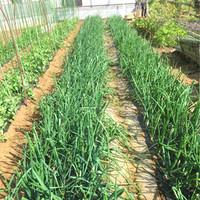 契約農家さんの想いをカタチに。自然の旨みが詰まった朝採れ野菜