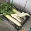 奥武島いまいゆ市場 - 料理写真:大根