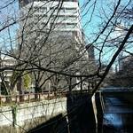 パーレンテッシ - 目黒川の桜はまだ蕾ですね。