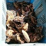 中山牡蠣養殖所 - 焼待ち