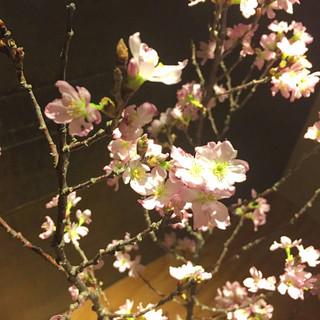 <春の歓送迎会に>楽しいと美味しいを感じてもらいたい!