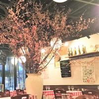 春満開!期間限定、桜の下で春を満喫♪♪