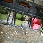 63798082 - 床に捨てられたあさり汁の貝殻