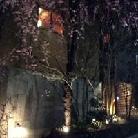 桜の見頃の御案内