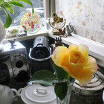ロータスガーデン - 戴いたバラの蕾が開いた翌朝