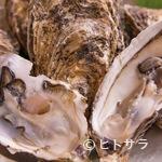 活食・隠れ酒蔵 かけはし - 旬ものが水揚げされる港を吟味。産地別『殻付きカキ』を食べ比べ