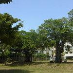 ココベーグル - 隣は公園です。