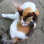 菜根 - お店の入口前でまったりしていた猫