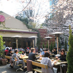 RANDY - 満開の桜の下