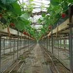 ゆきもと農園 -