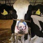 ミルクパレット - お店の隣には牧場があります、牛さんやポニーちゃんにも会えますよ♪
