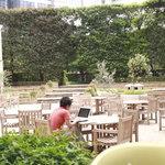 東京ベリーニカフェ - テラス席から見渡した風景、広々しています。