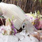 博多 表邸 - 料理写真:生簀より取り出される新鮮な呼子直送活烏賊