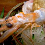 割烹 利助 - ヨシ海老は頭部を湯引きで。