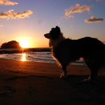 オアシスブルーカフェ - 夕日を眺めながら…