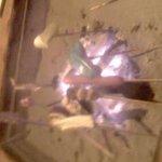 ZENZO - 囲炉裏で焼きます