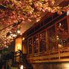 焼鶏あきら - 外観写真:大きな桜の木の下で川のせせらぎと共に。