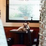 楽日庵 - 看板犬の吟