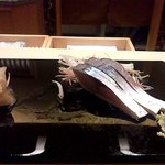 鮨 水谷 - 鯖の造り