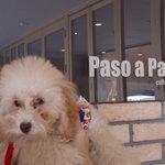 パソアパソ - Paso a Paso